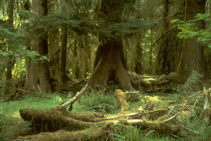 One-fifth of forest species rely on dead wood (Photo: Mark Harmon)