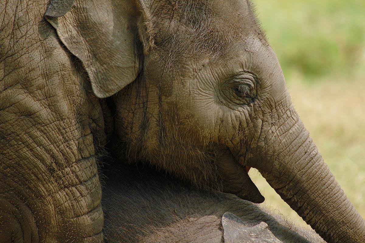WED baby elephant.jpg
