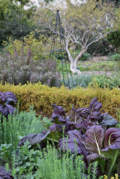 Potager/herb garden.