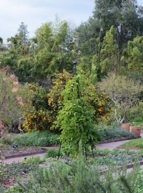 Herb garden obelisk.
