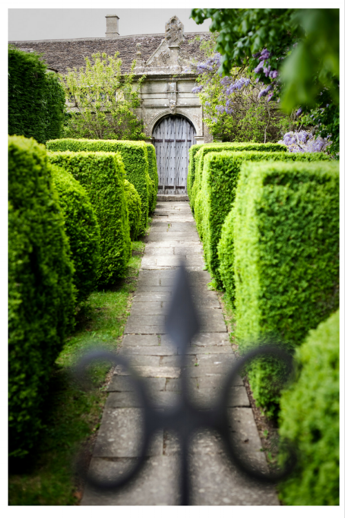 Beautiful boxus topiary with lined stone paved path.