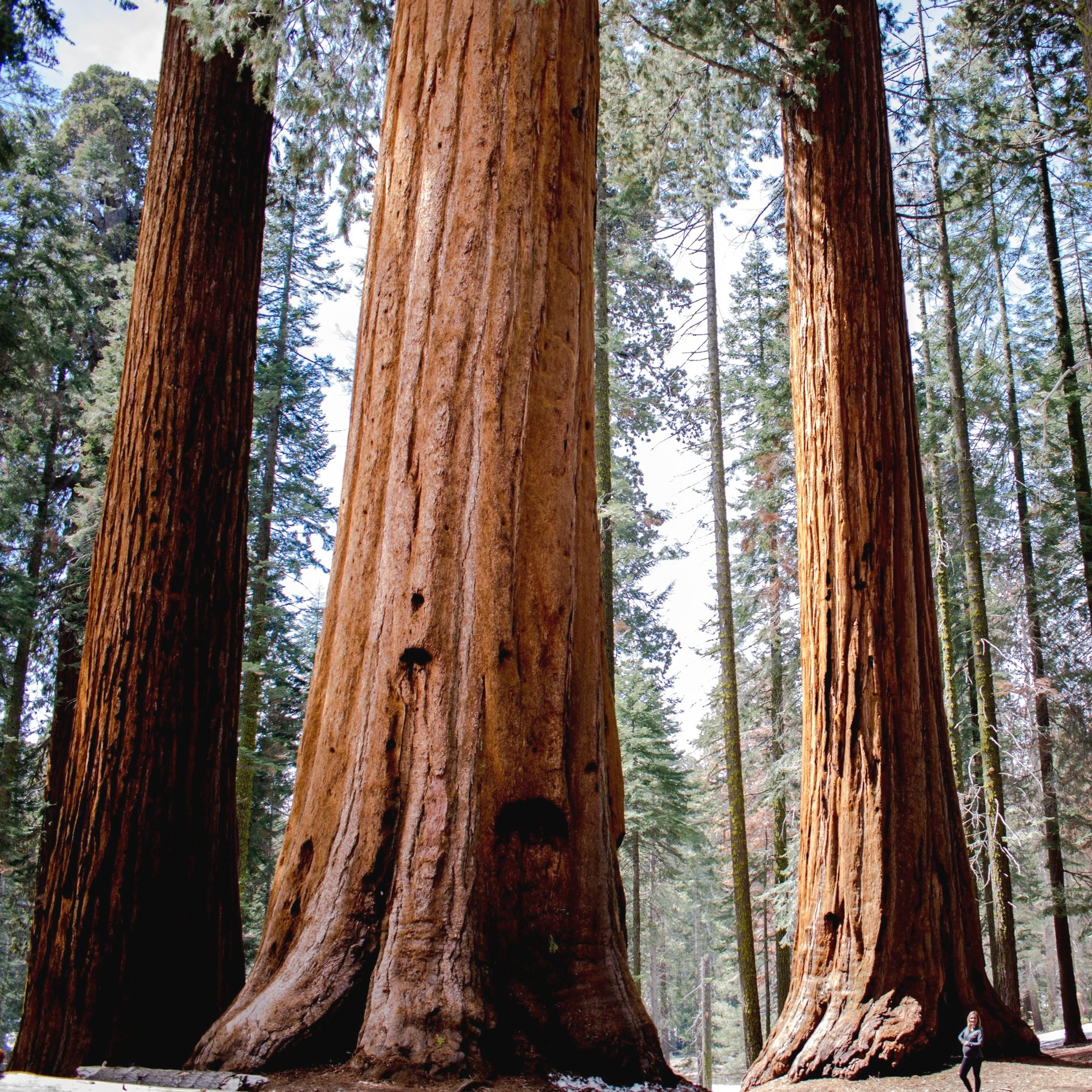 SequoiaNP-26.jpg
