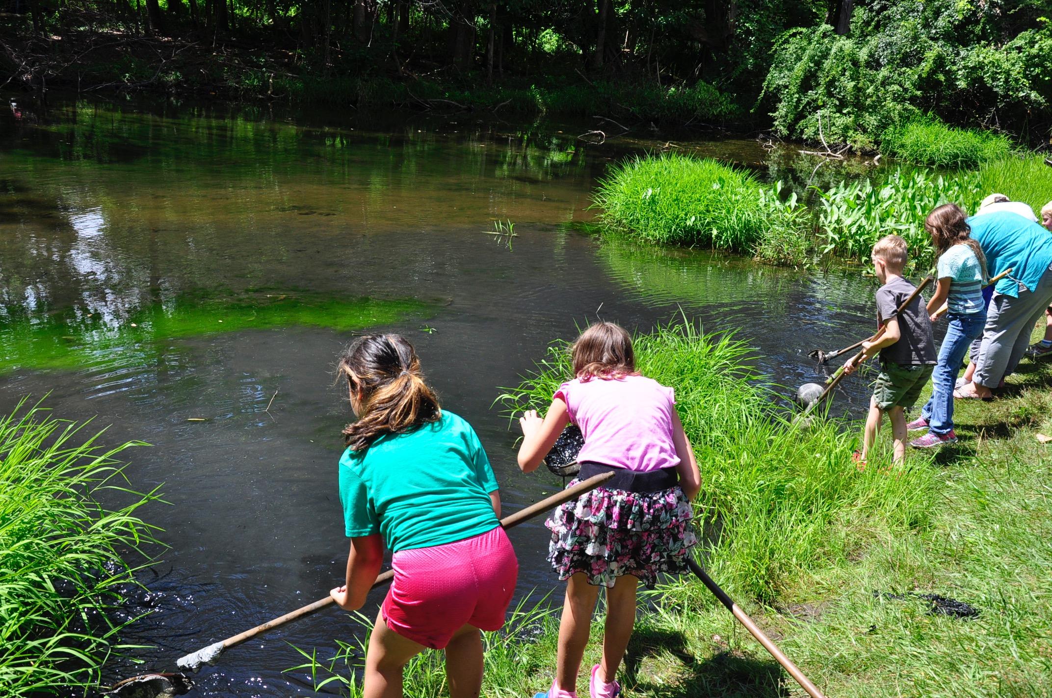 Pond Dipping_SNC.jpg