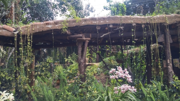 We had lunch at this ourdoor restaurant. Notice the vegetation rooftop and orchid. A lush place to relax and enjoy nature.