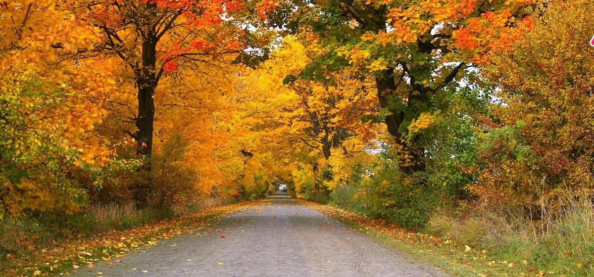 autumn_avenue_trees_away_road_tree_lined_avenue_leaves_asphalt-1295493.jpg