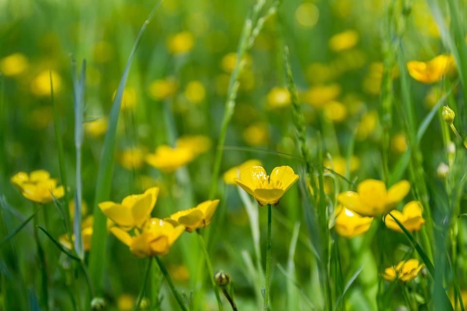 meadow-2393669_960_720.jpg
