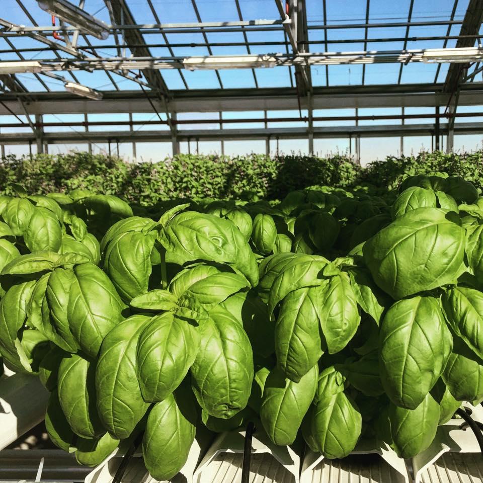 AgTech Indoor FarmTech Startup Agrilyst