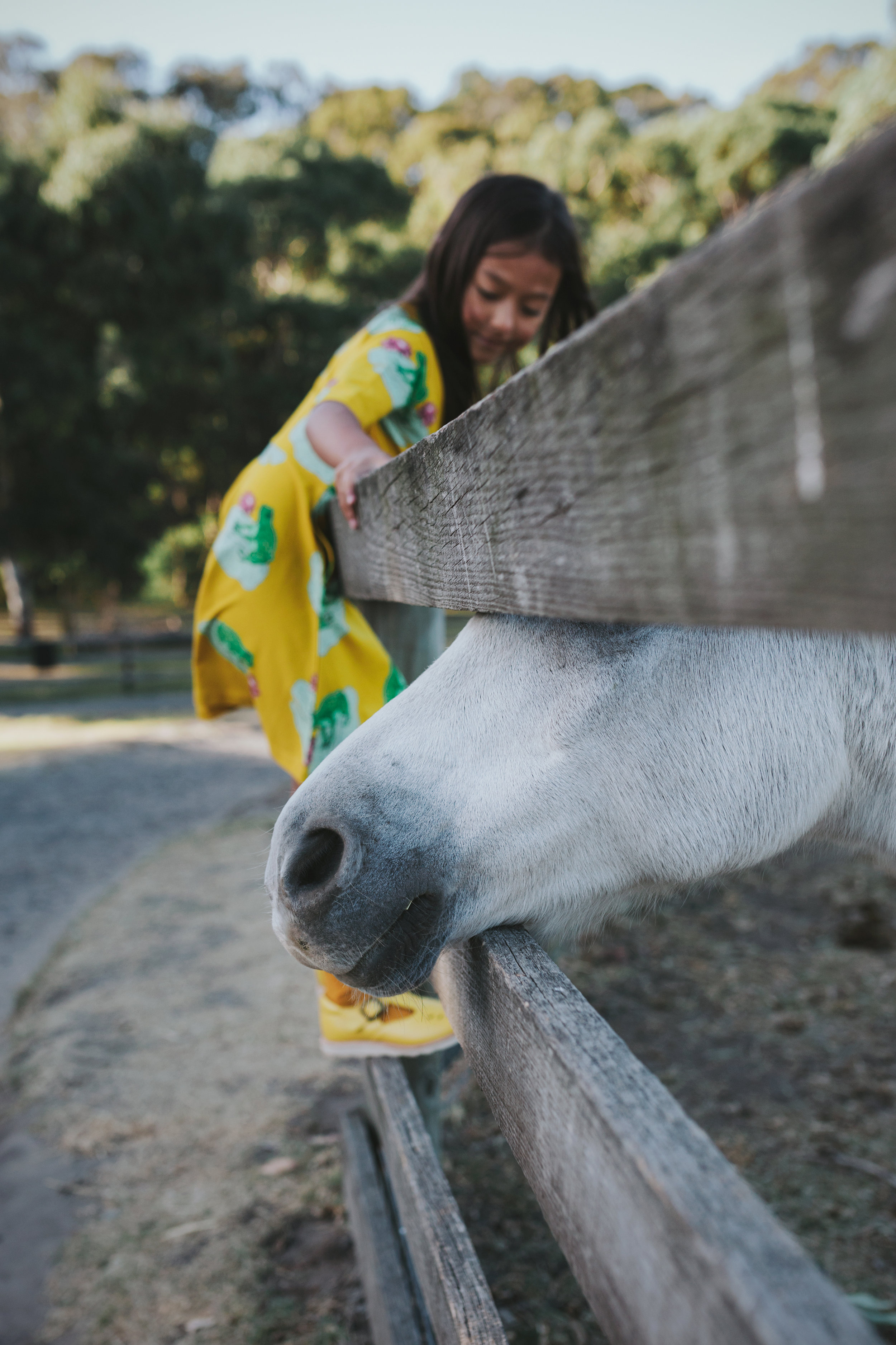horse-nose-fence-kids-commercial-photographer-siida-tasmania.jpg