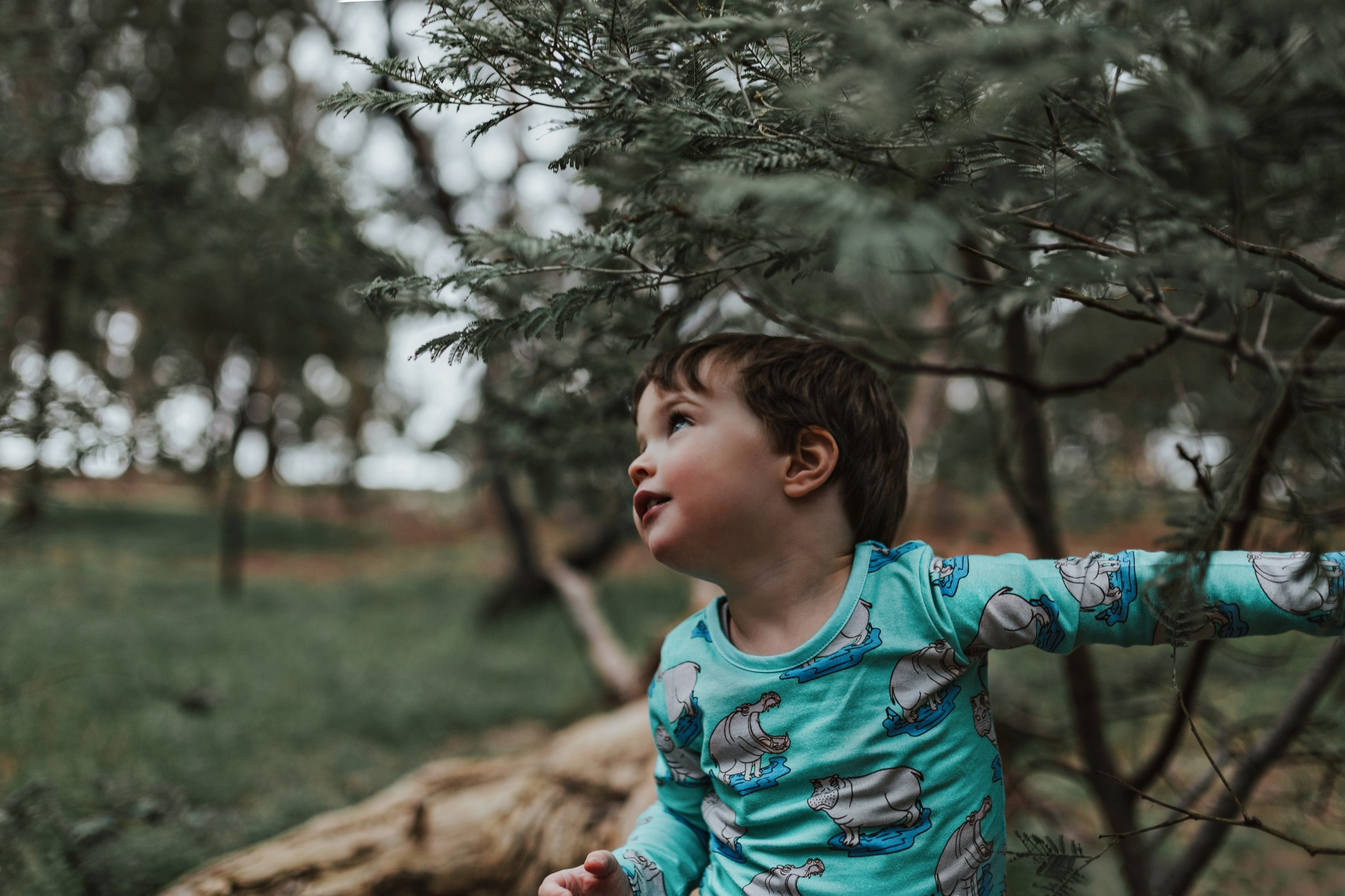 boy-peeking-tree-commercial-photographer-siida-tasmania.jpg