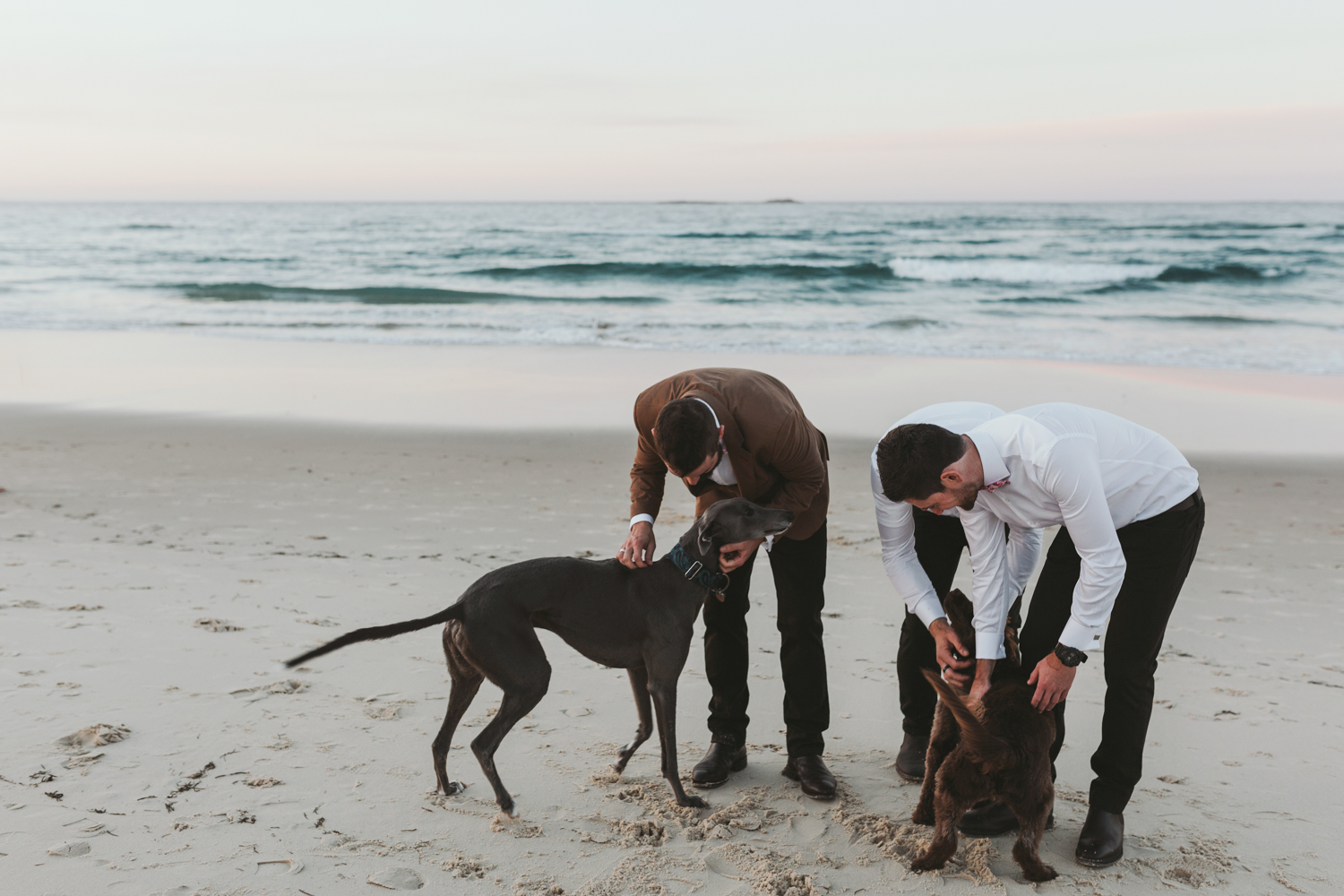 Groomsmen pat dogs at the beach after ceremony.