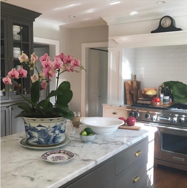 More Orchid love in the home of Maura Endres
