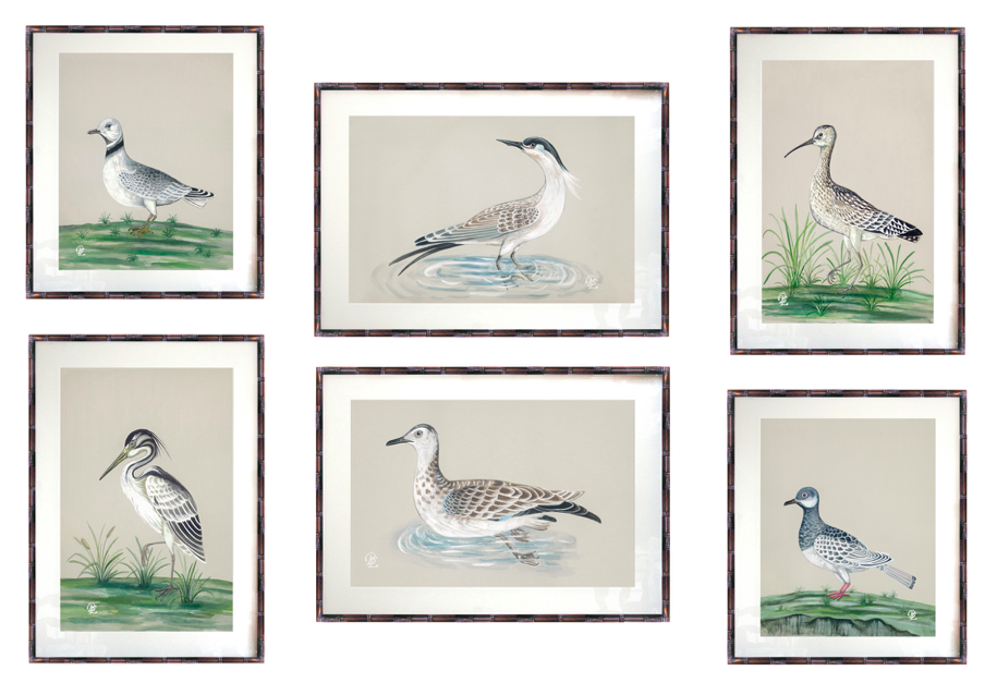 Verandah House Nature Collection - Birds1.png