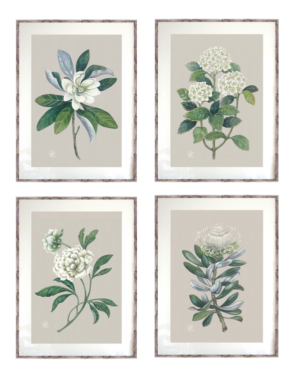 Verandah House Botanical Collection.png