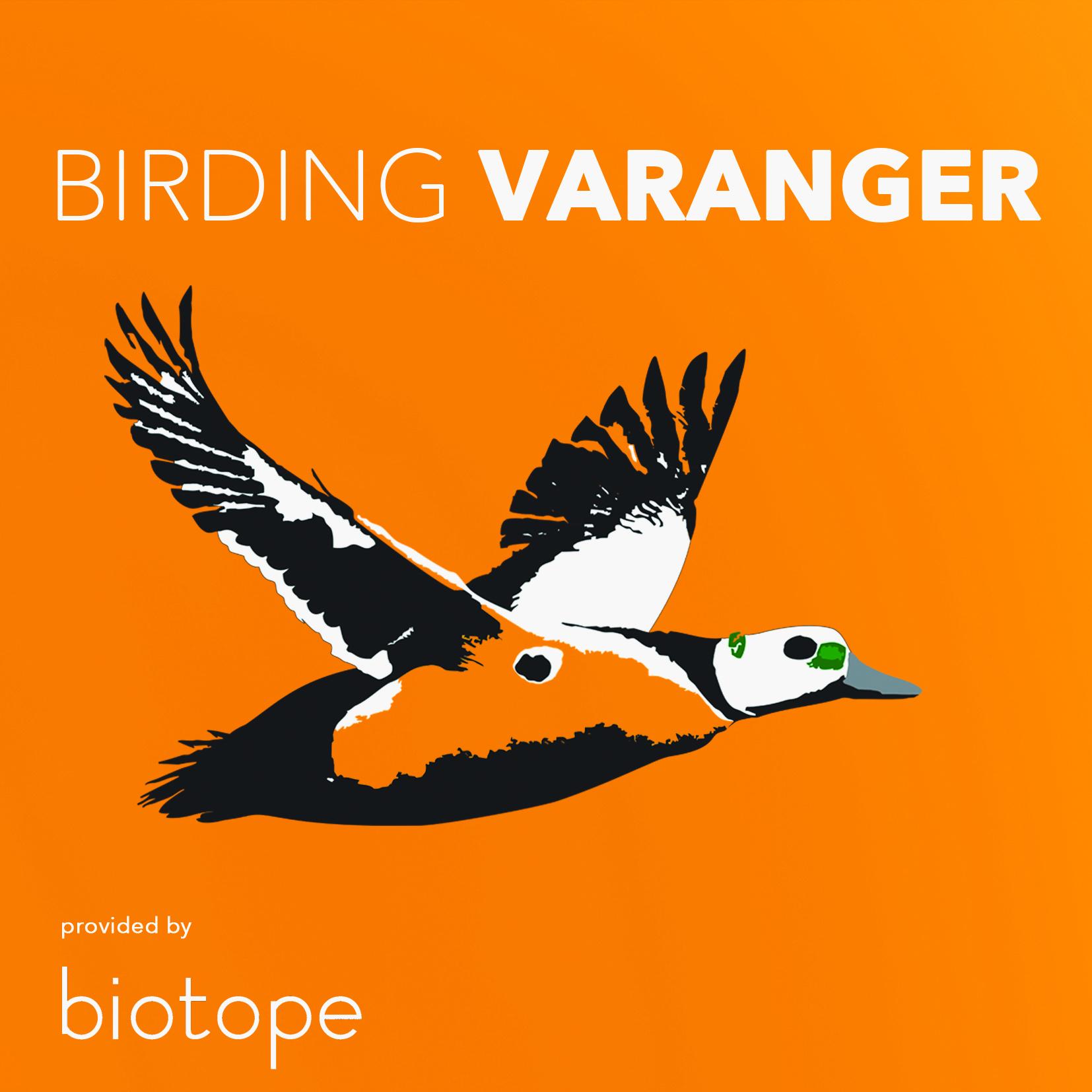 Birding Varanger logo