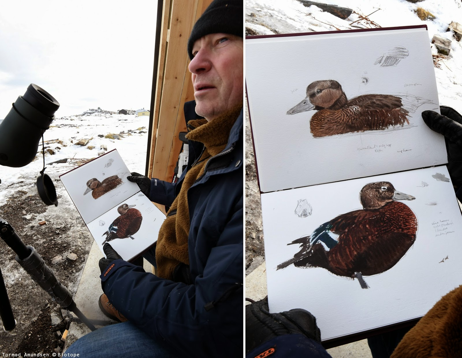 Gullfest 2015 Lars Jonsson at Hasselnes birdhide sketching ps-edit Amundsen © Biotope.jpg
