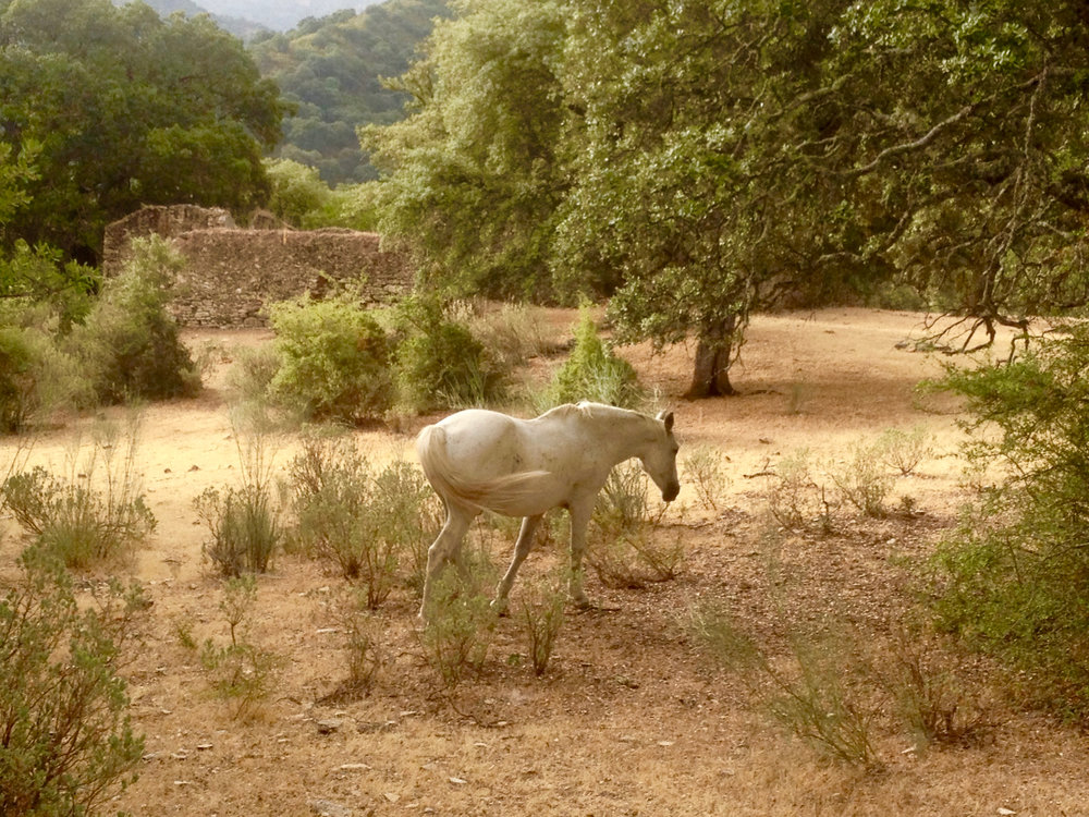 White horse living close to our luxury villa rental in Ronda, Andalucia, Spain