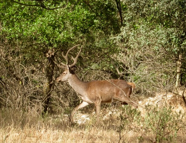 red_deer_at_luxury_villa_rental_ronda_spain