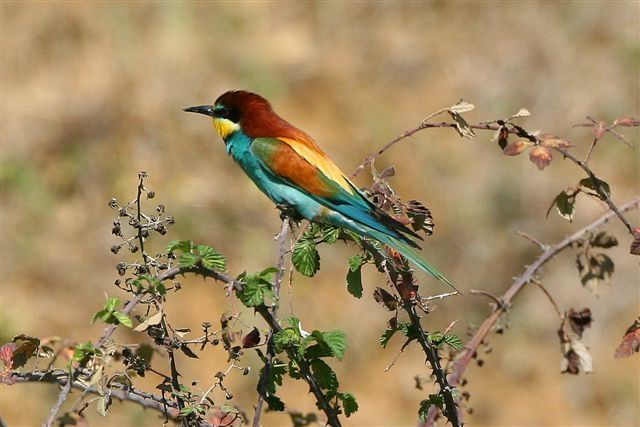 bird_watching_ronda_andalusia_spain