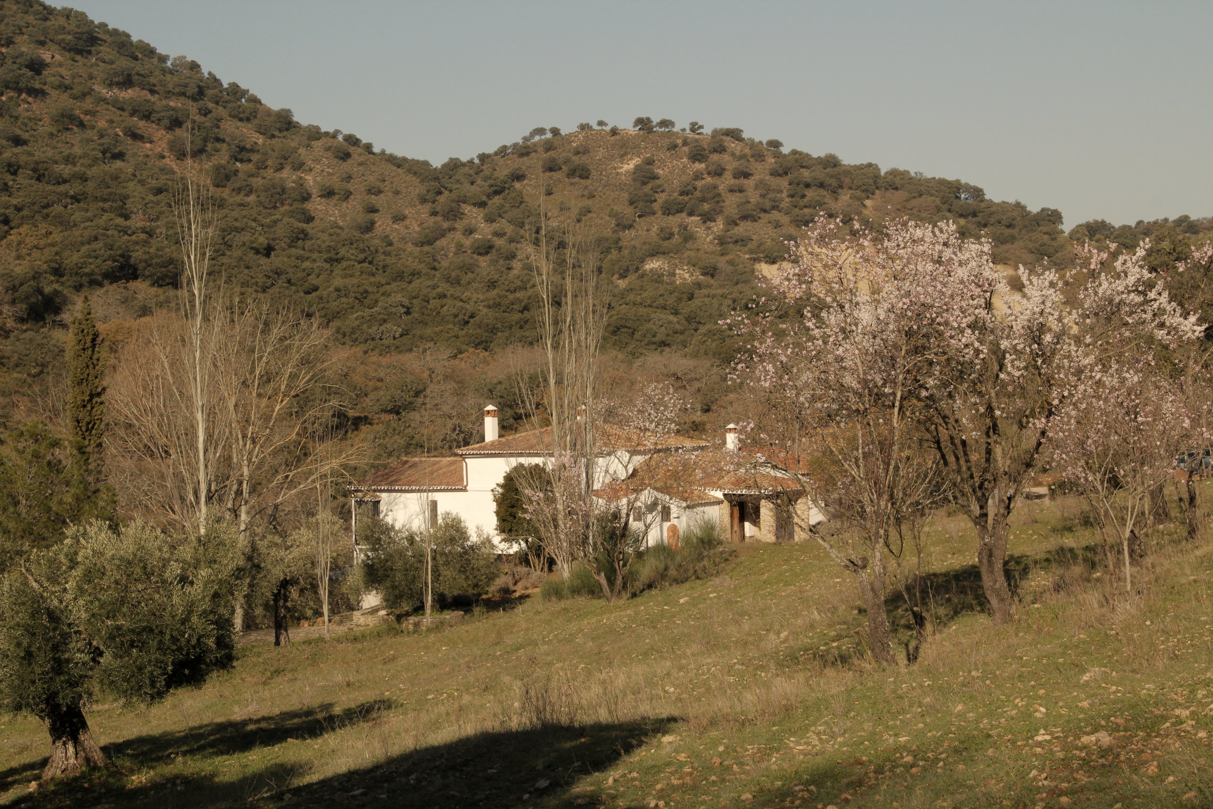 Almond trees in blossom at our luxury villa rental in Ronda, Andalucia