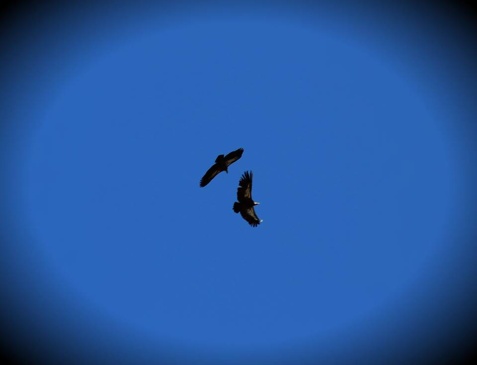 Griffon Vultures (we actually took this!!!)
