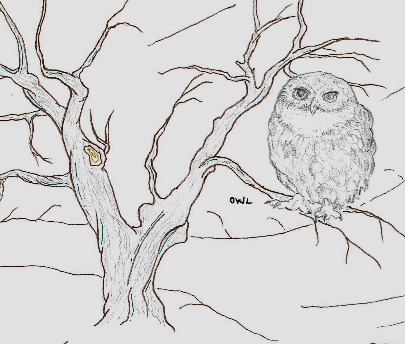 Sketch for the nature trail by Vix