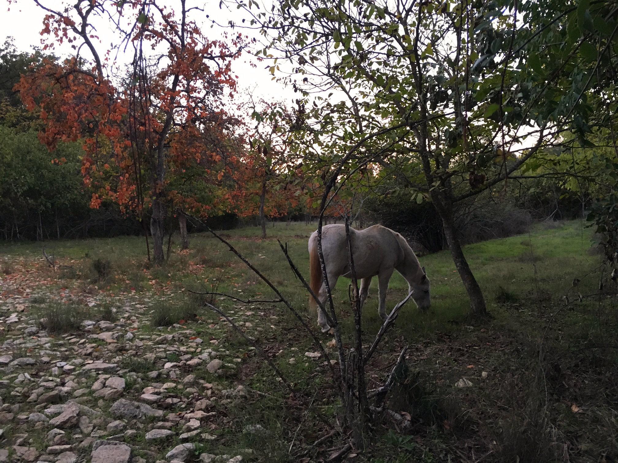 Unicorn_rescued_horse_at_luxury_villa_rental_Ronda_Andalucia_Spain