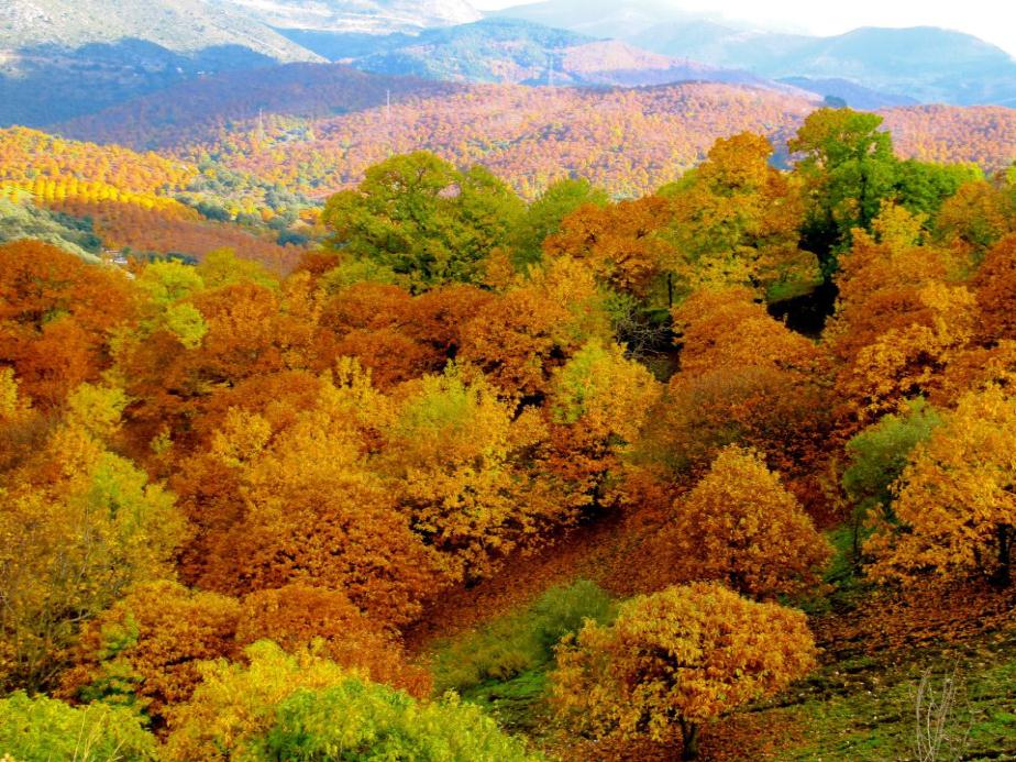 Chestnut_trees_autumn_Andalusia