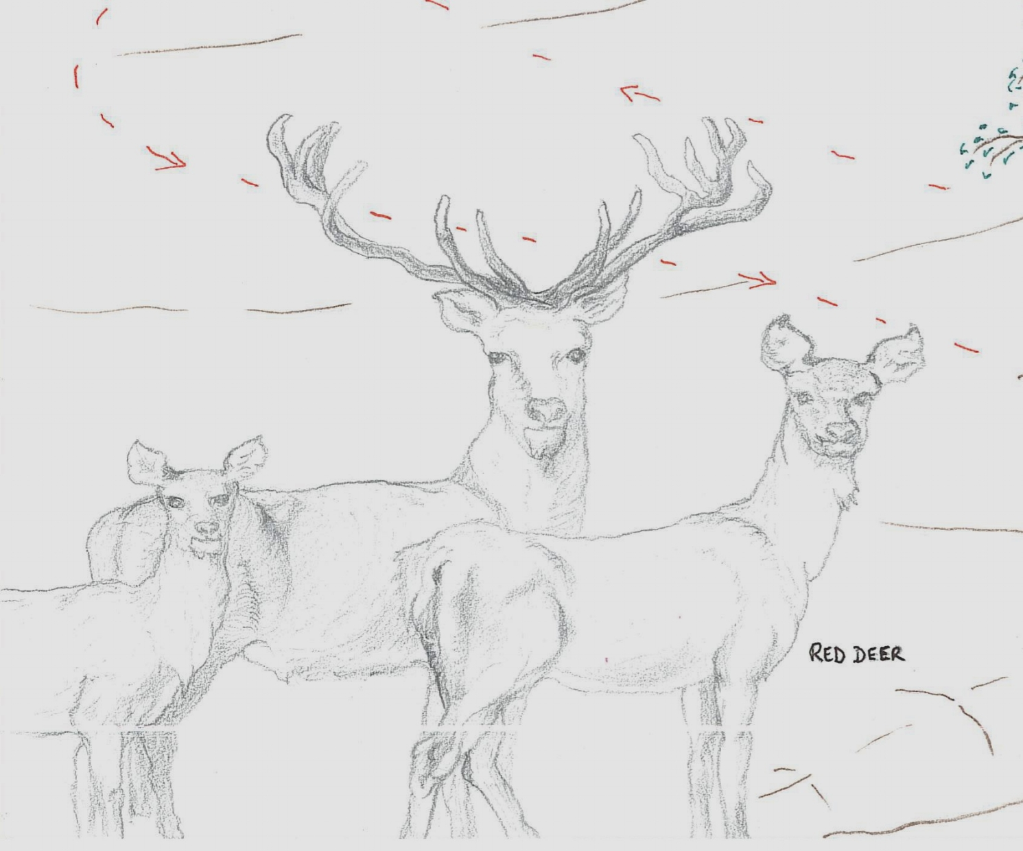 red_deer_at_luxury_villa_rental_ronda_andalusia_spain