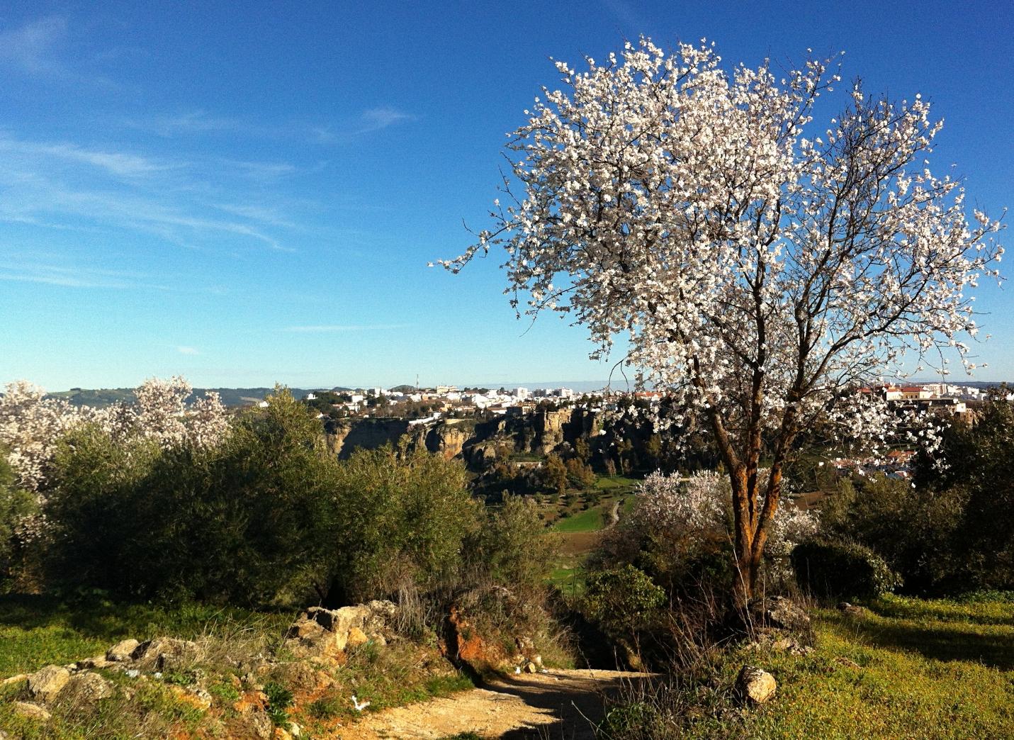 almond_blossom_spring_luxury_villa_rental_ronda_andalusia_spain