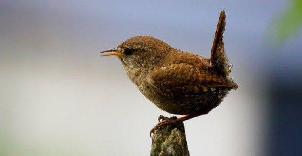 Photo credit Universe Birds