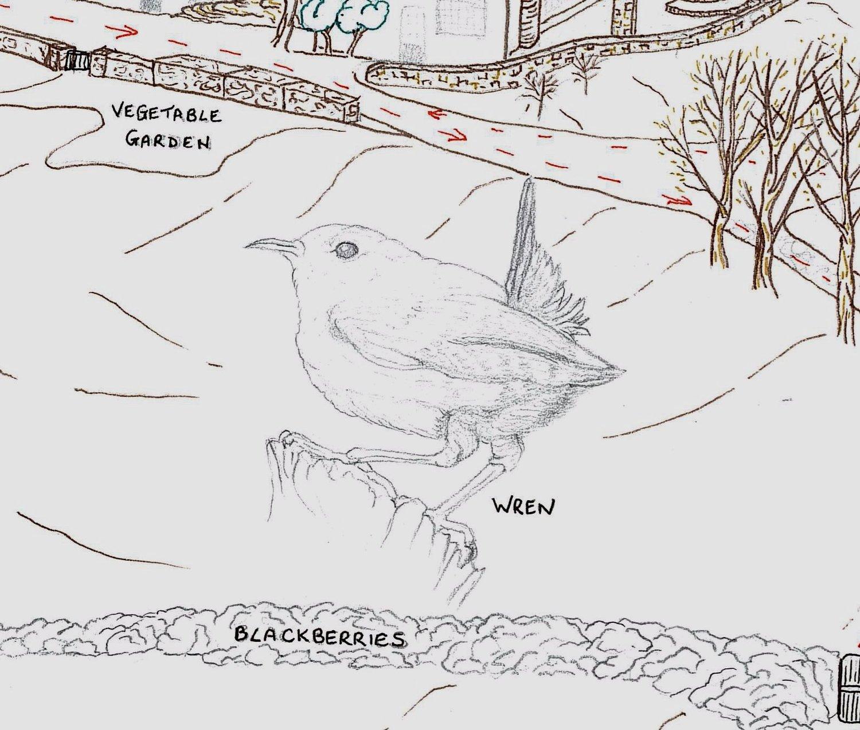 Vix's pencil sketch of a wren