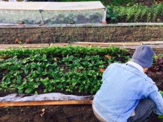 market garden yasuji.jpg