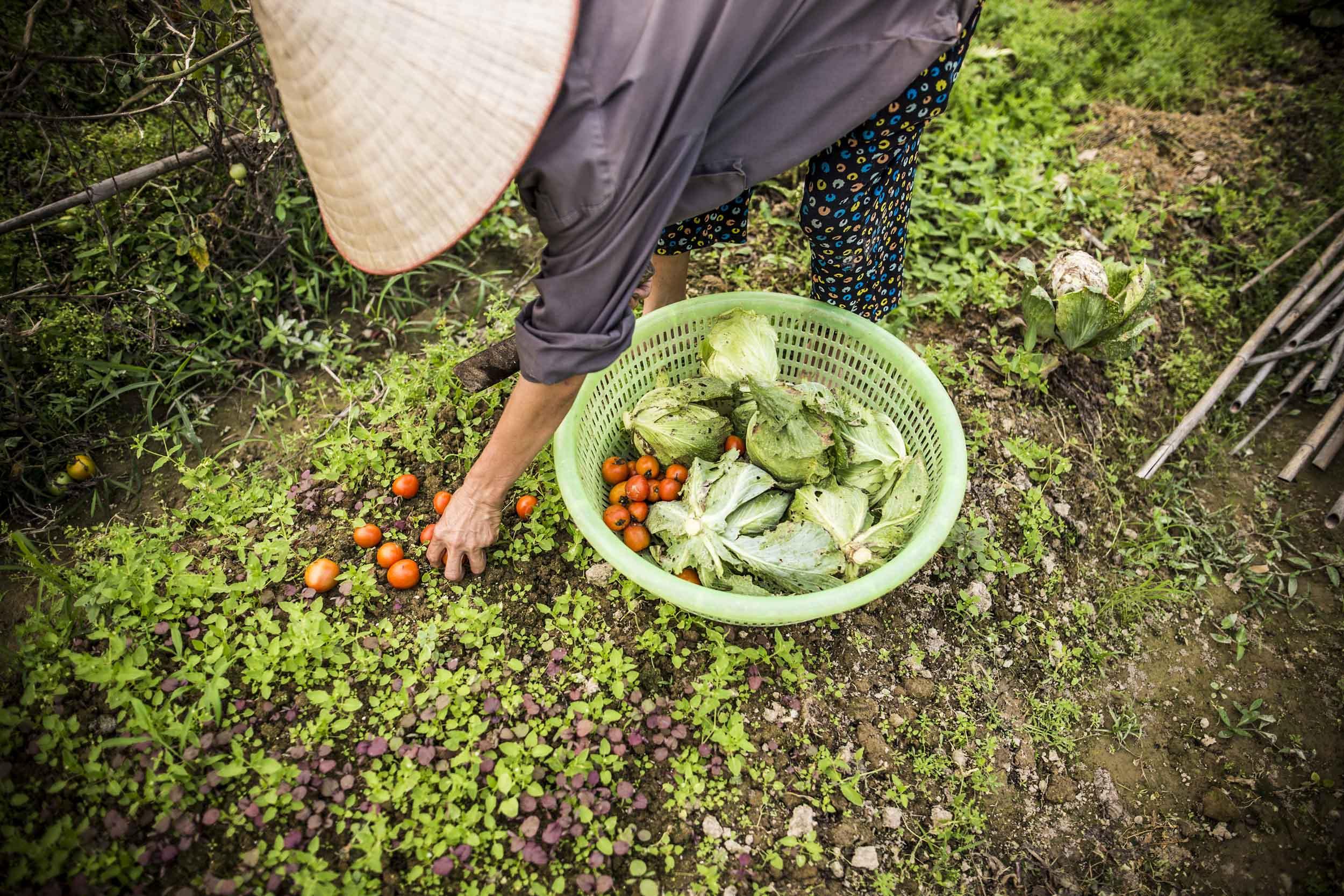 Farming | Hanoi