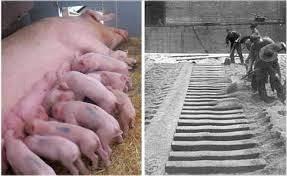 """Navnet """"pig iron"""" kommer av at støperennen og de tilkoblede formene (pigs) ligner en purke som mater ungene sine."""
