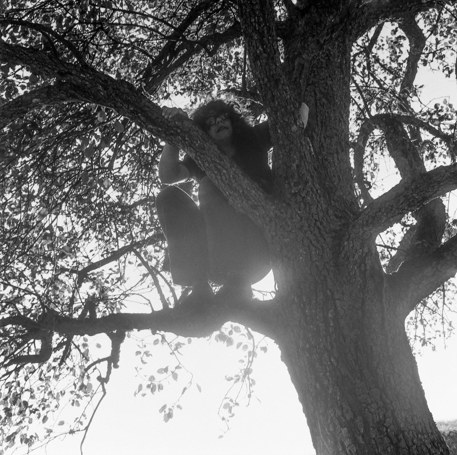 Jumbo on a tree