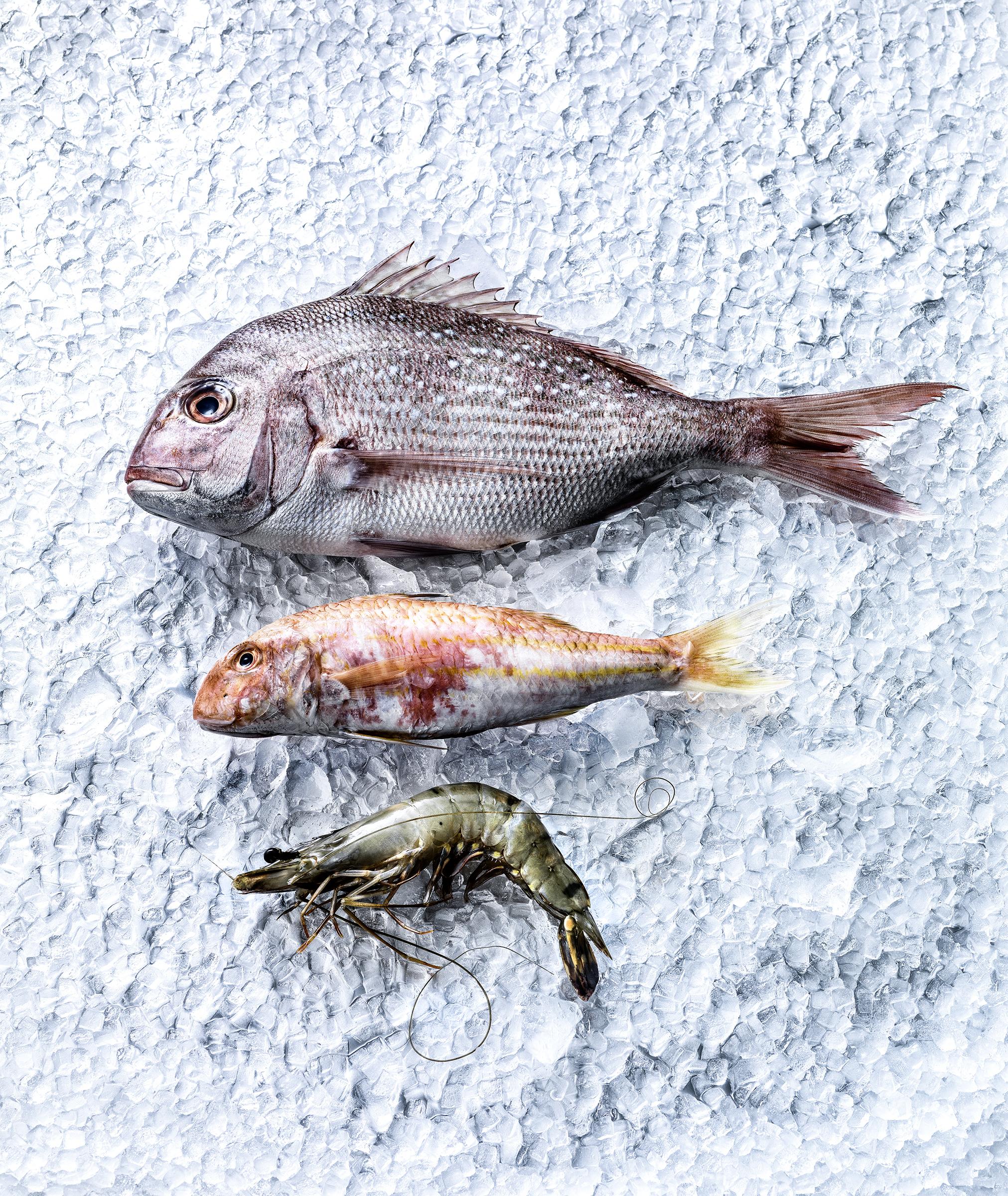 fresh fish, Foodfotograf Zürich Schweiz