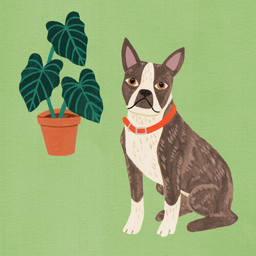 Boston-Terrier-and-plant.jpg