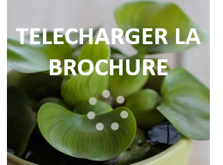 TELECHARGER LA BROCHURE.png