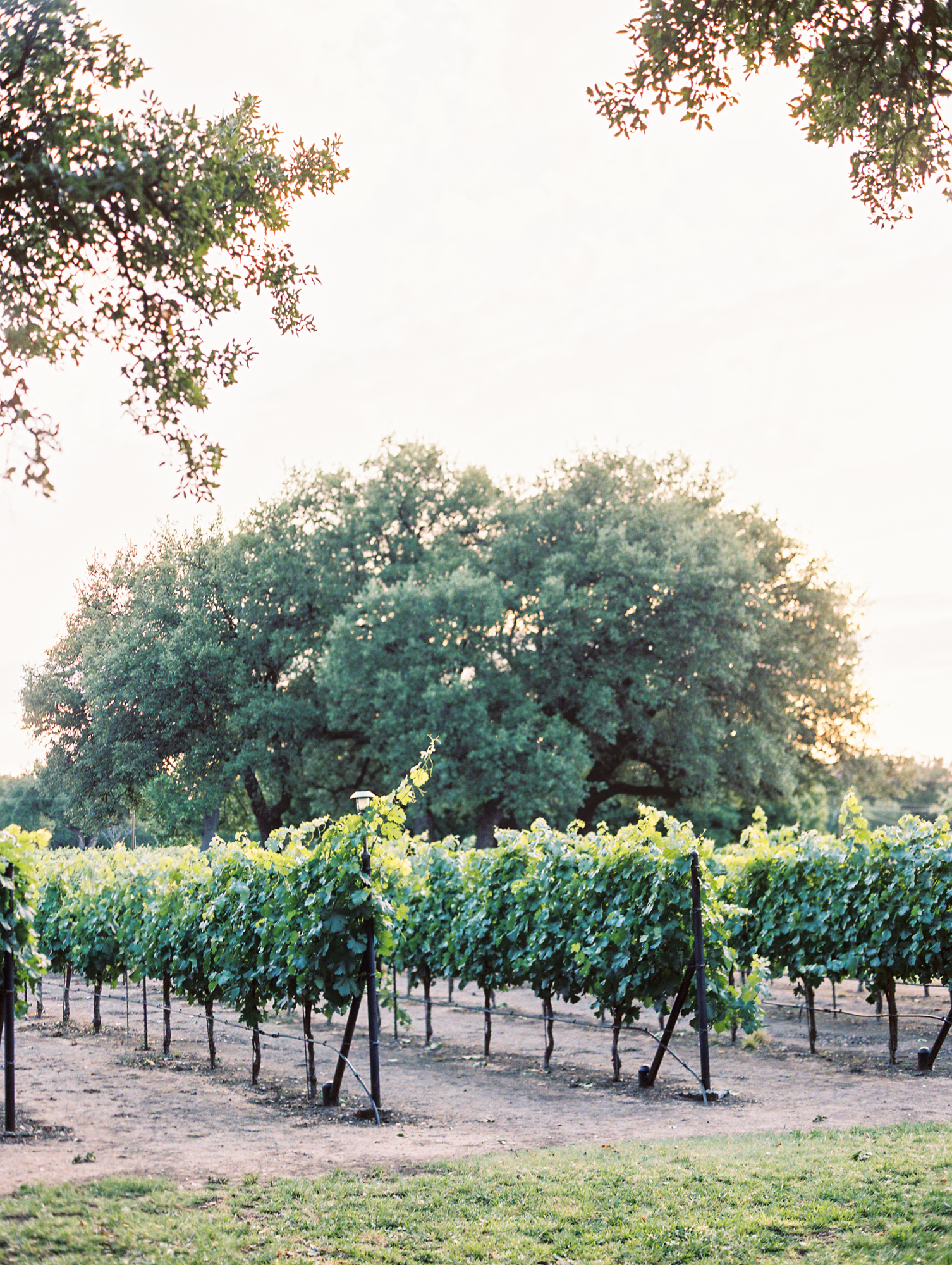 Elegant Spring Vineyard Wedding | Film Wedding Photographer | Austin Wedding Photographer | Texas Wedding Venue, Chapel In The Vineyard in Christoval, TX | Britni Dean Photography // britnidean.com