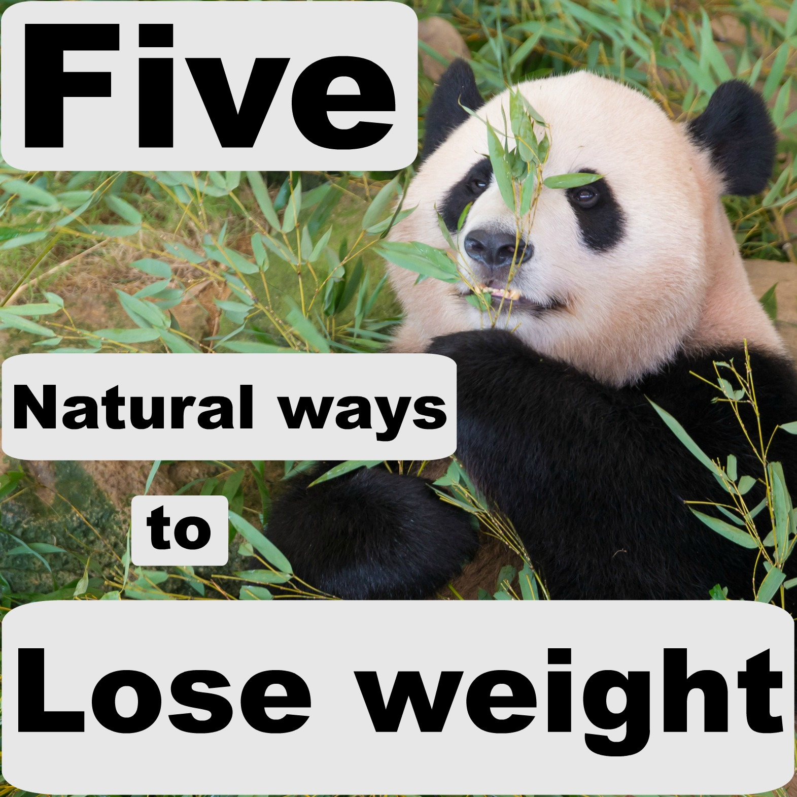 How To Lose Weight Naturally And Permanently Without Exercising And