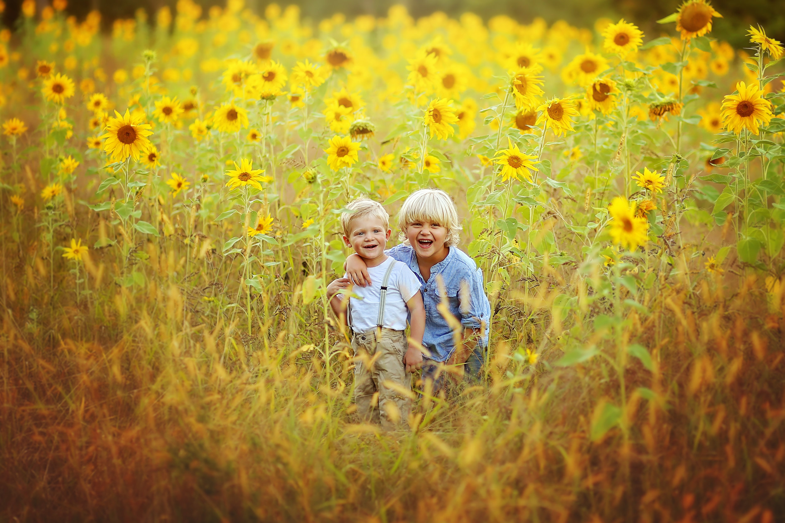Sunflower photo sessions in Buffalo, NY