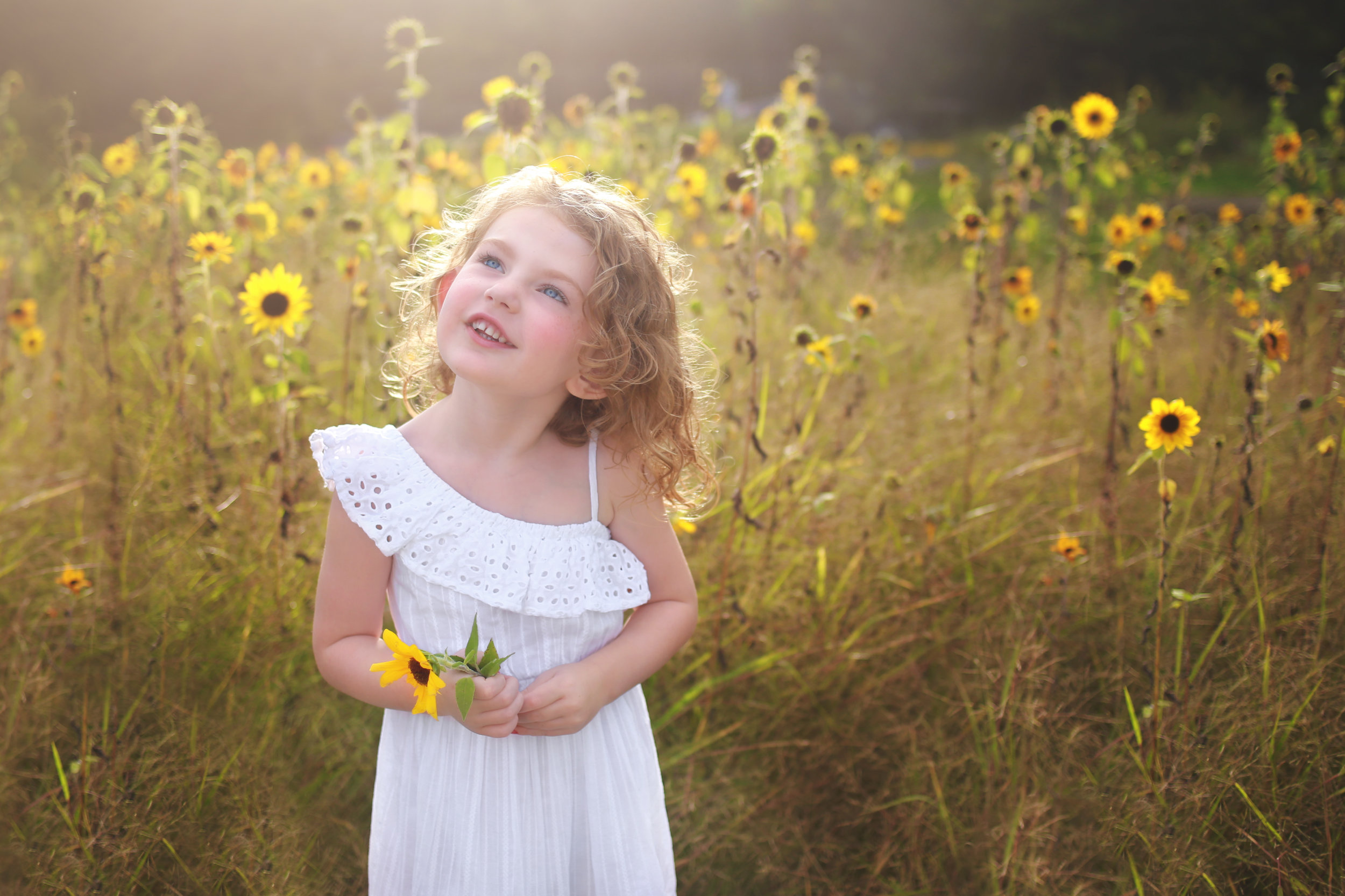 sunflower photo session in WNY