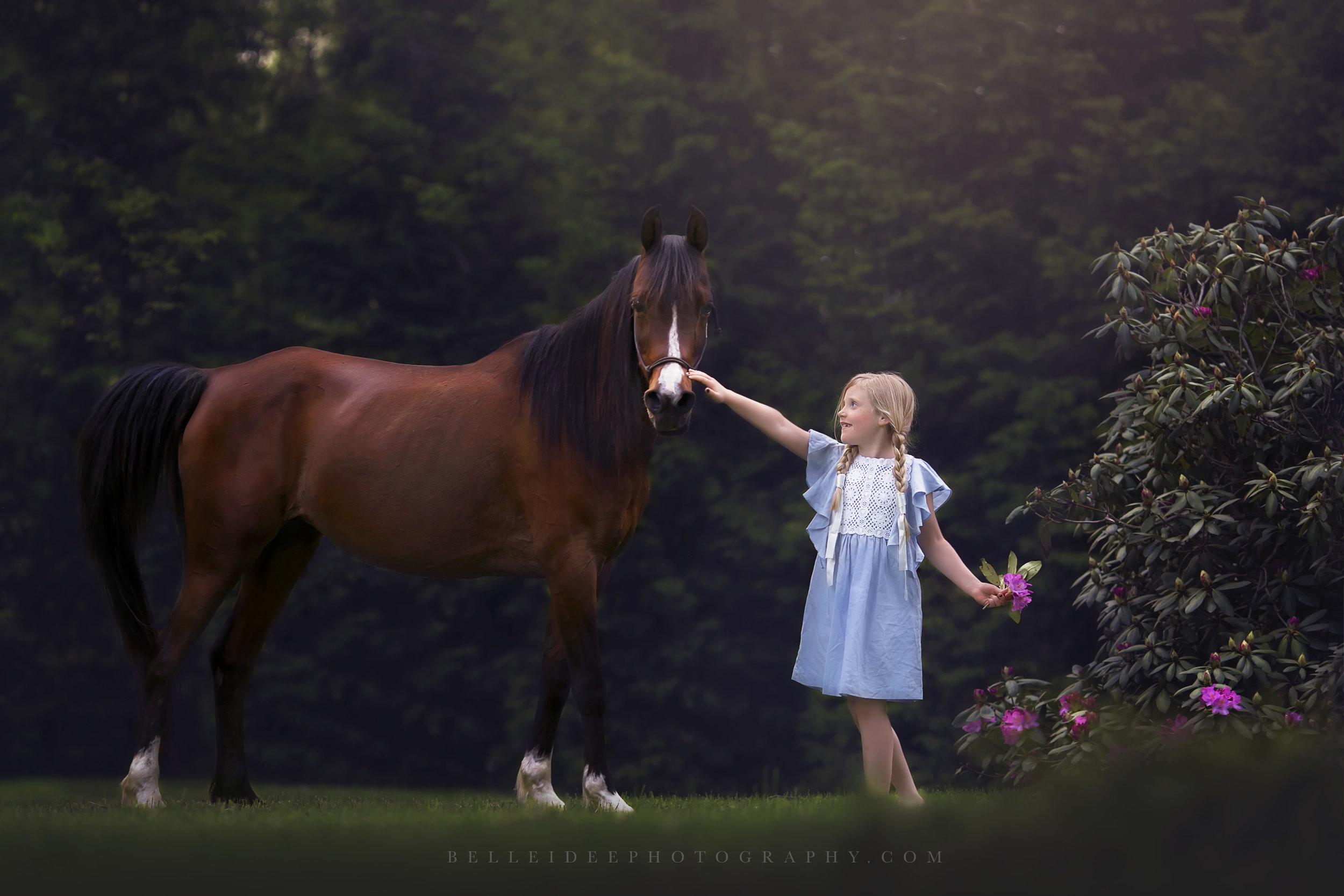 Buffalo, NY Horse Photographer