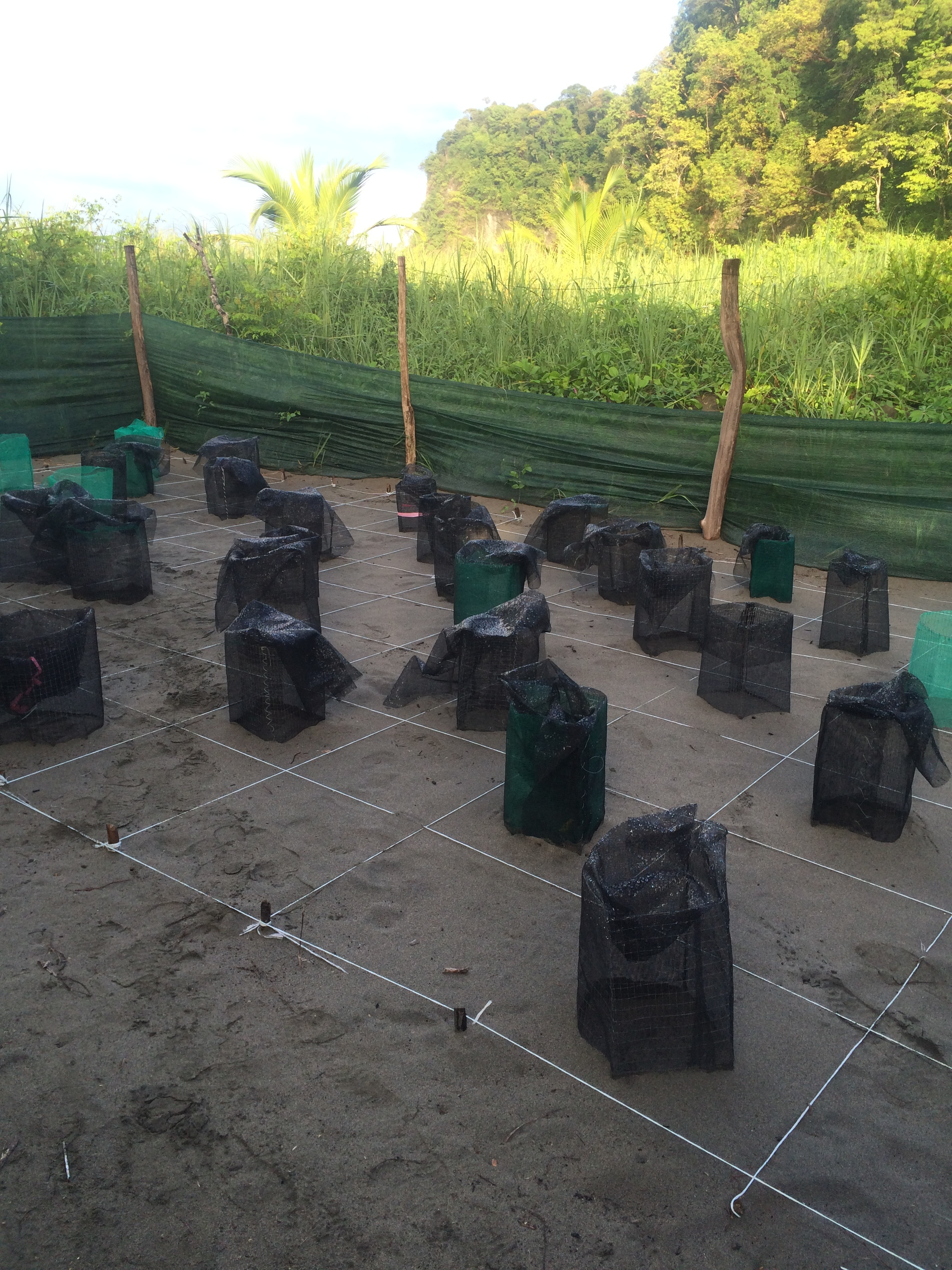 Sea turtle hatchery monitored 24/7 by the patrol team.