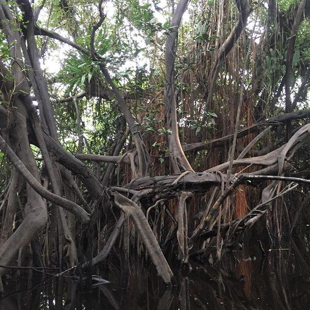 The lower jungle. La selva baja. #amazon #adventure #tropicalrainforest #solotravel #wildlife #selva #peru