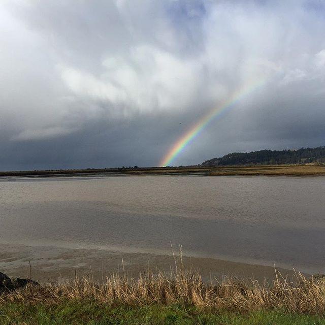 Rainbow on a stormy field day.  #northcoast #wetlands #rainbow #fieldwork