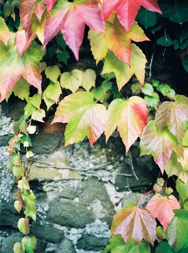 Viennese_Autumn_Wedding_50s_Style_0048.jpg
