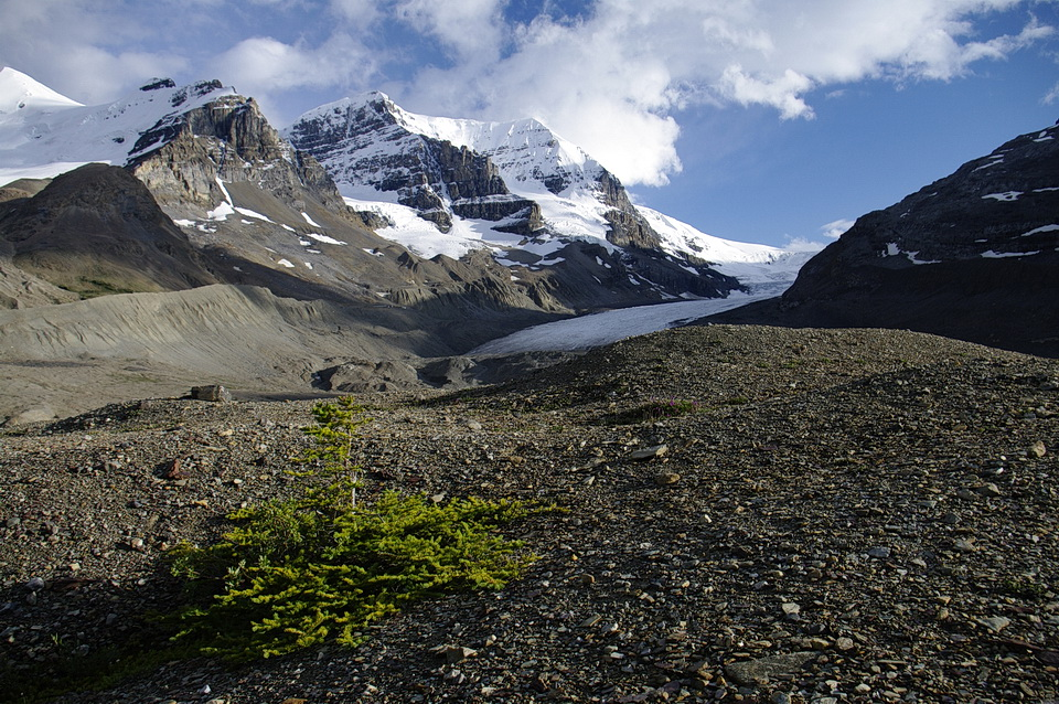 Figure 4: This photo of the Athabaska glacier, Alberta, in the Rocky Mountains,illustrates what parts of southern Ontario likely looked like when the last glacier melted back about 15,000 years ago to expose the land to the Sun. The gravelly material is called a glacial moraine and it is deposited by the glacier. Some willows and alpine plants and shrubs repopulate the land quickly, within 40 years or less. Photo by Andy Fyon, July 22, 2011.
