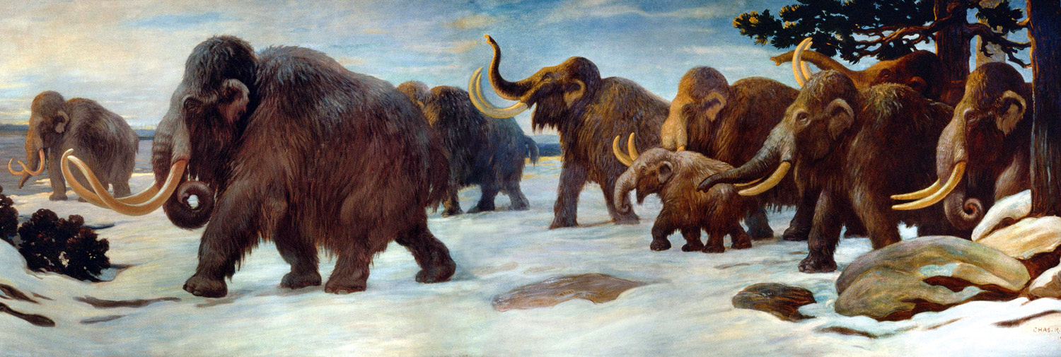 Figure 2: A mural depicting Woolly Mammoths near the Somme River, France. Image made public in 1916, according to the book Charles R. Knight: The Artist Who Saw Through Time: http://io9.gizmodo.com/5891441/celebrating-charles-r-knight-the-artist-who-first-brought-dinosaurs-and-megafauna-to-life