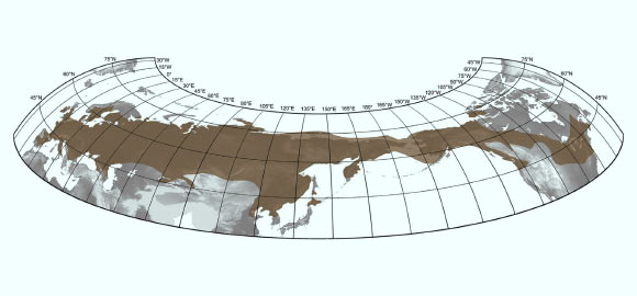 """Figure 9: The maximum distribution of Woolly Mammoth species across North America, Asia, and Europe. Image from """" Paleontologist Releases Most Accurate Map Yet of Woolly Mammoth Distribution """"."""